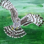 """Hen Harrier"" by Julie Nichols"