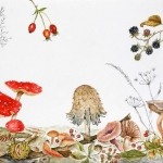 """Toadstool & Autumn Fruits"" by Janet Sirrell"