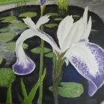"""Pond Iris"" by David Reeves"