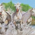 Camargue Horses (Carole Rigler)