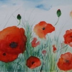 Poppies (Heather Toms)