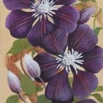 Camellia Trellis (Hilary Bithell)