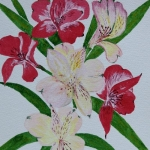 Alstromeria (Christine Riley)