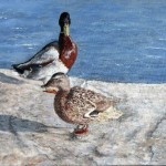 """""""Ducks in Poole Park"""" by Frances Wheatley"""