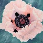 Oriental Poppy(Mo Scurr)