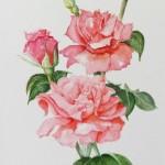 Roses (Dee Jennings)
