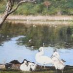 Swans at Hatch Pond(Frances Wheatley)