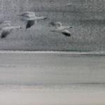 Snow Geese(Melanie Smith)