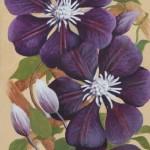 Camellia Trellis(Hilary Bithell)