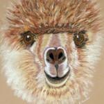 """""""Alpaca"""" by Ros Tucker"""