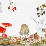 """""""Toadstool & Autumn Fruits"""" by Janet Sirrell"""