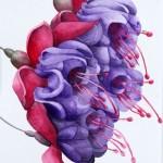"""""""Fuchsia Flounce"""" by Hilary Bithell"""
