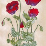 """""""Poppies"""" by Kath Sumner"""